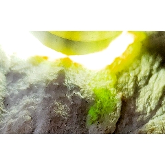 TN27天然翡翠原石