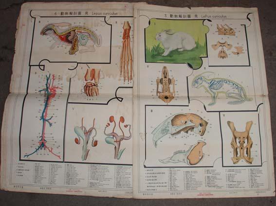动物解剖图