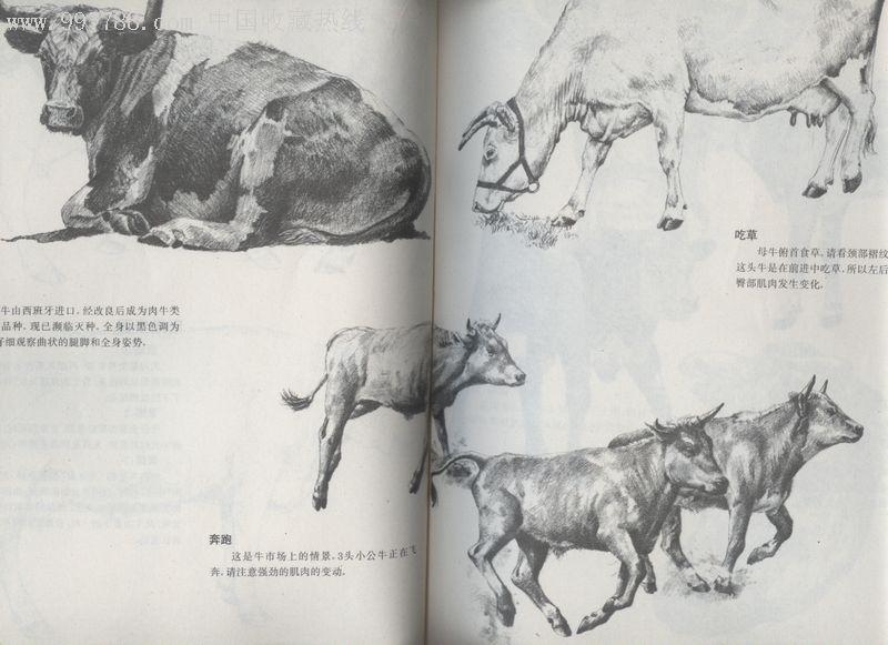 动物画法-au1289418-素描/速写画册-拍卖-7788收藏