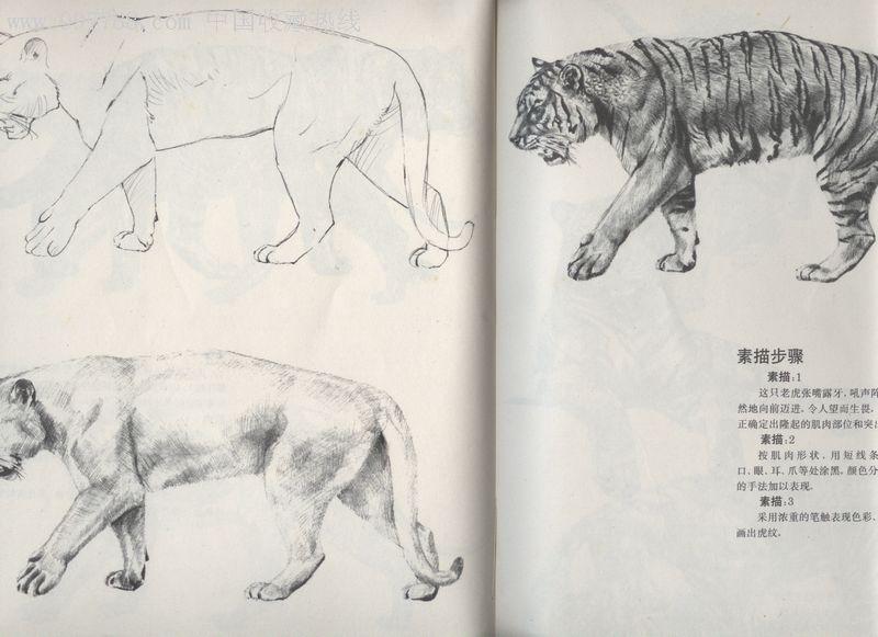 物速写的要点和画法步骤图片