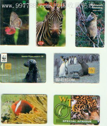 外国动物卡