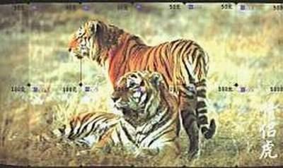 壁纸动物虎老虎桌面400_238