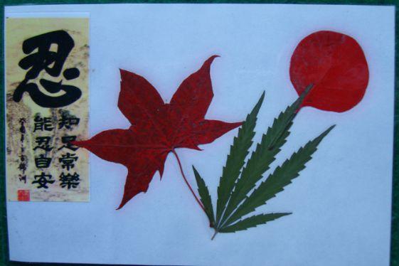 精美香山红叶等植物标本 5>_树叶/植物标本_镇海收藏