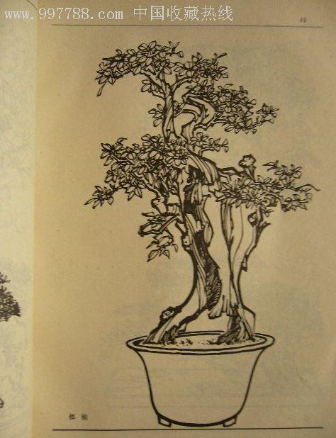 黑白卡通盆栽图片