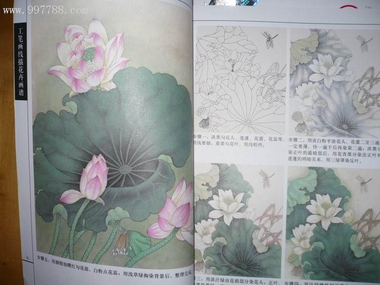 工笔画线描花卉画谱(荷花篇)