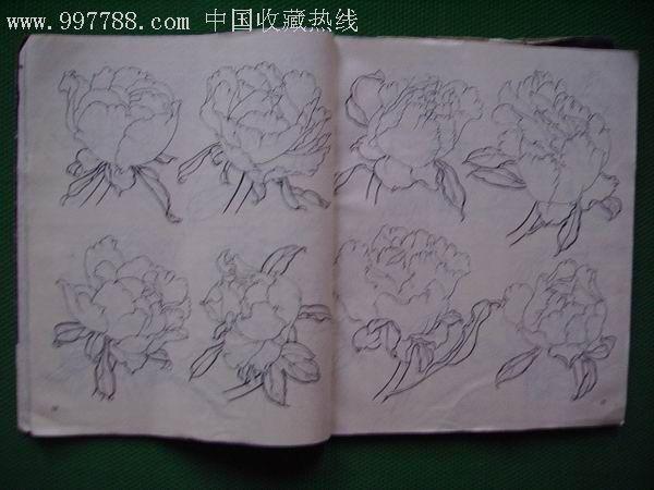简单牡丹花铅笔画展示