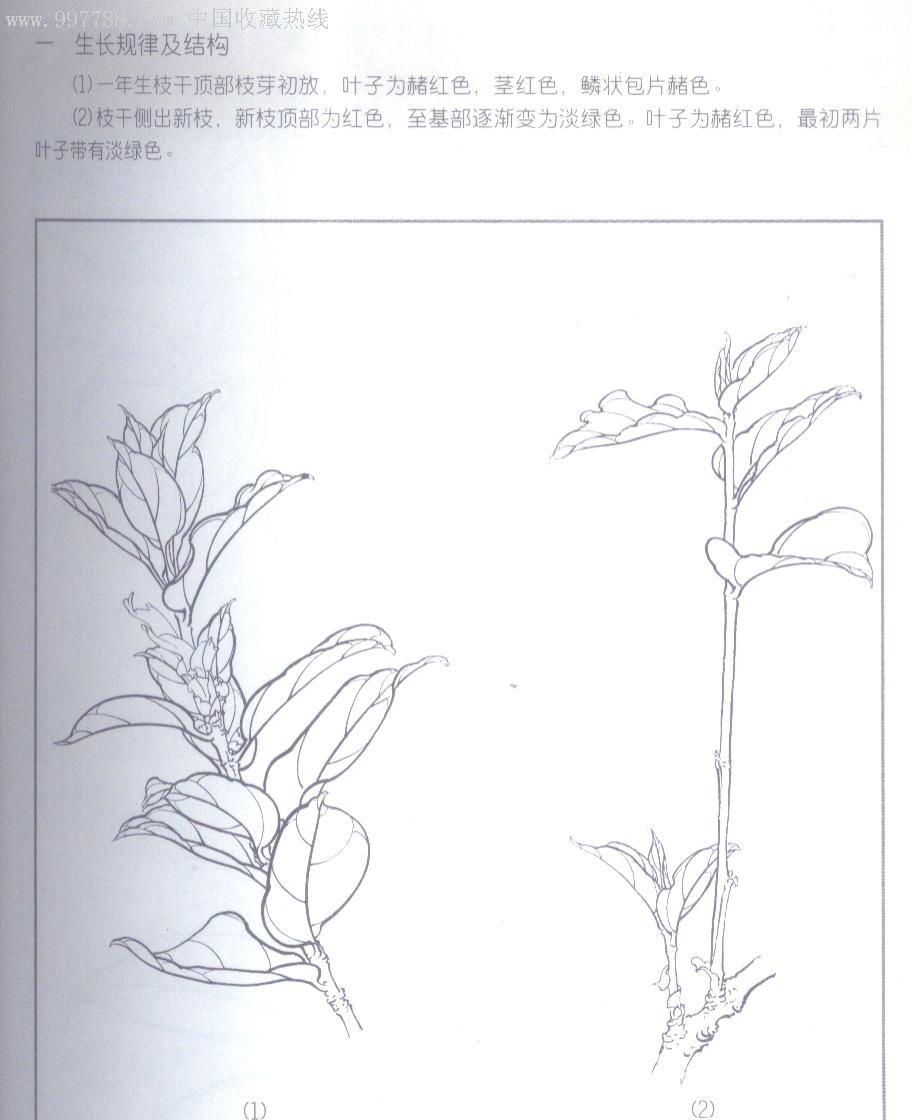 抽象手绘茶树花