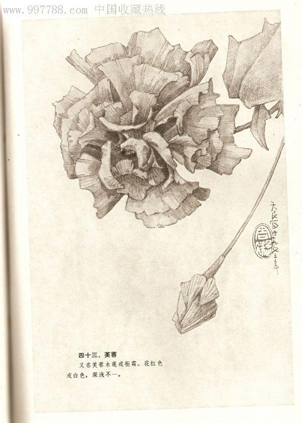 简单速写花卉图片