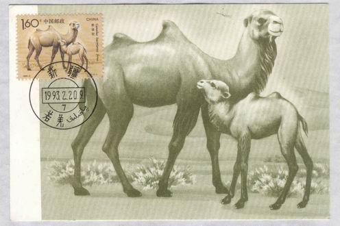 93野骆驼新疆双文字极限片一套