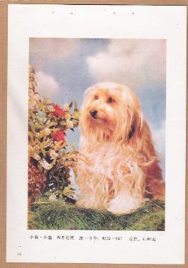 手绘狗狗年画图片