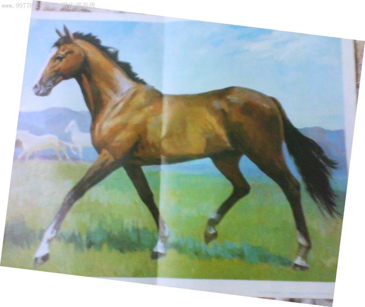 幼教挂图---常见动物1/马