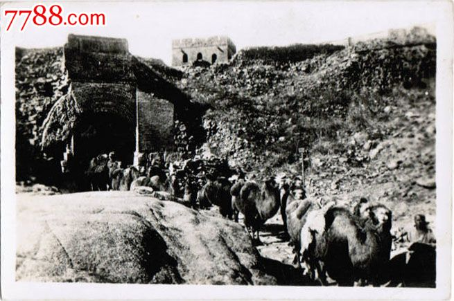 zp428民国时期老照片——行进中的骆驼商队