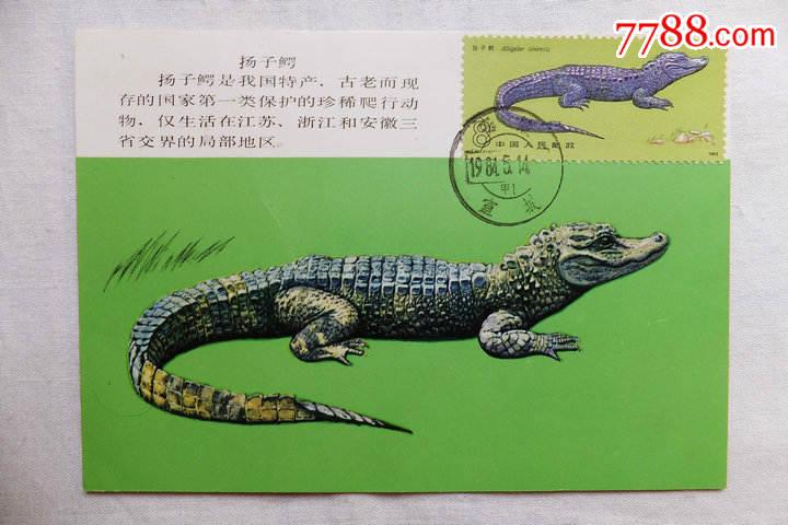 """自制极限片""""扬子鳄""""一套二枚-au12249955-明信片/邮资"""
